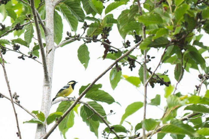 キブンガン郡でのアグロフォレストリーによる植林と生態系調査プロジェクト終了しました!_b0128901_16344619.jpg