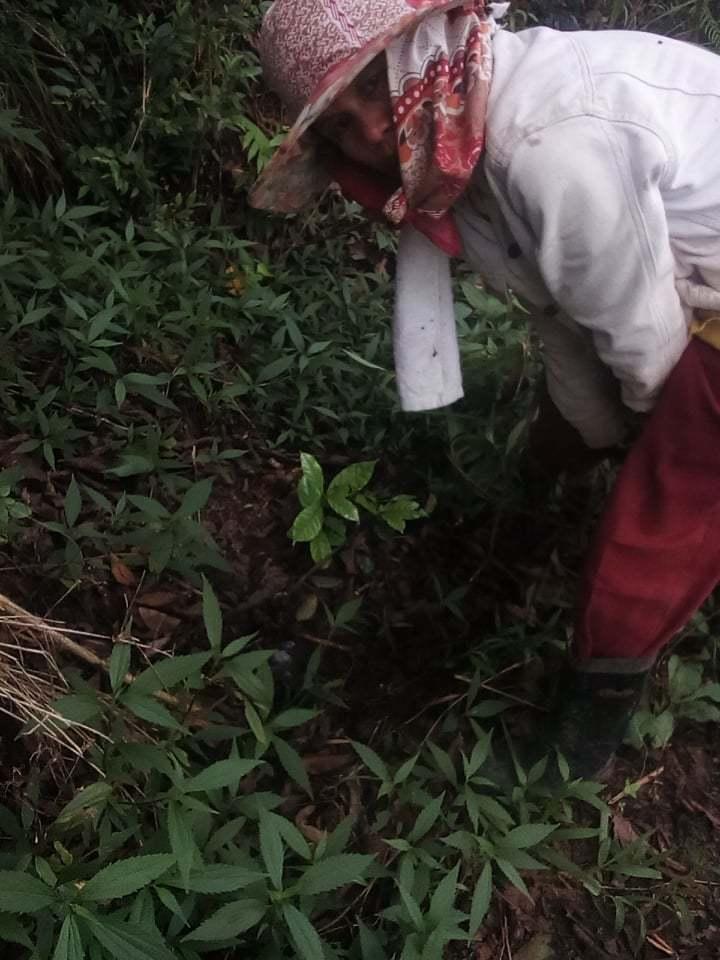 キブンガン郡でのアグロフォレストリーによる植林と生態系調査プロジェクト終了しました!_b0128901_16362450.jpg