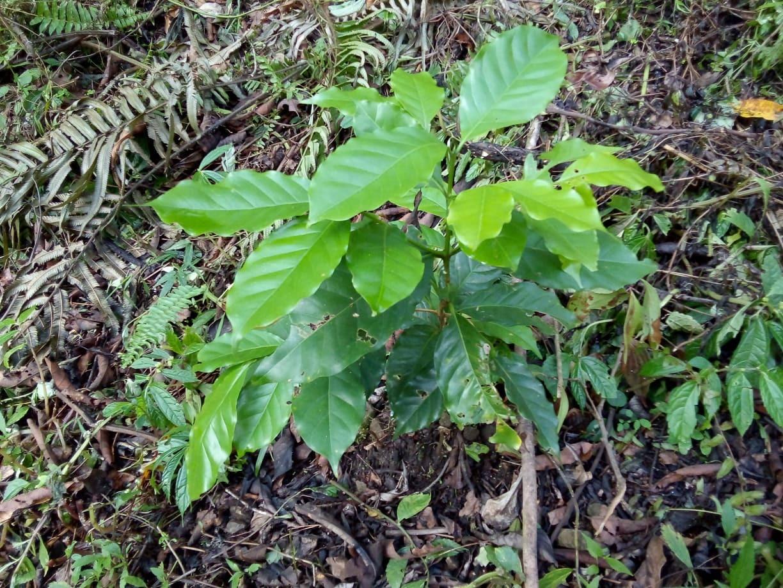 キブンガン郡でのアグロフォレストリーによる植林と生態系調査プロジェクト終了しました!_b0128901_17082838.jpg