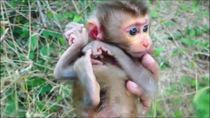 お猿さんの子育て動画にハマる…その③_c0162404_10131668.jpg
