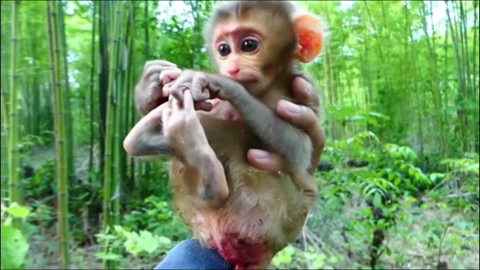 お猿さんの子育て動画にハマる…その③_c0162404_10143538.jpg