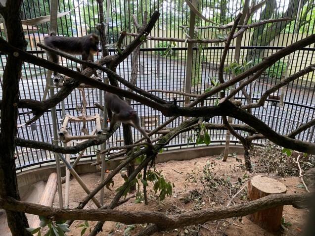 マンドリル舎に木を入れました‼_c0290504_13485944.jpg