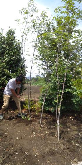 庭づくり   草花と樹を買いに_d0080906_20590984.jpg