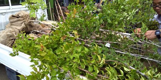 庭づくり   草花と樹を買いに_d0080906_20592683.jpg