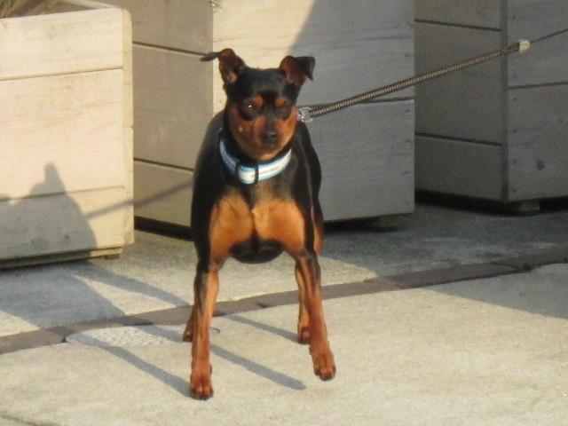 飼犬とチェス_b0203907_21391303.jpg