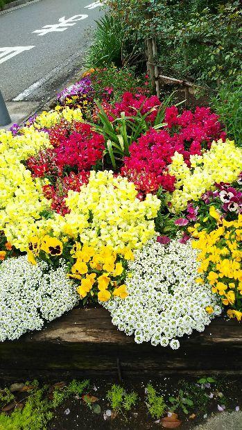 差入れやお花について_e0091114_19322121.jpg