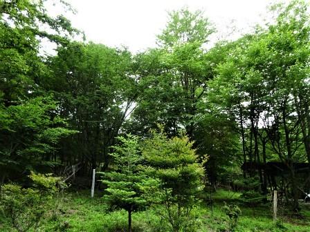企業の森活動日記 サーラエナジー㈱ サーラの森_d0105723_08193989.jpg