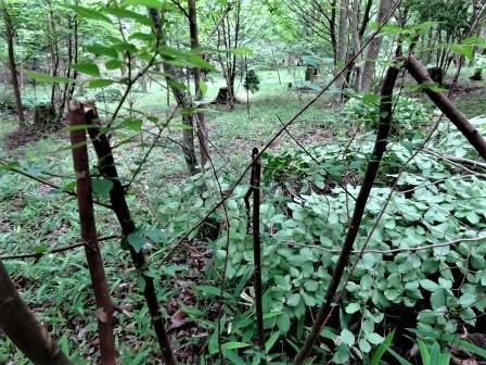 企業の森活動日記 サーラエナジー㈱ サーラの森_d0105723_08200935.jpg