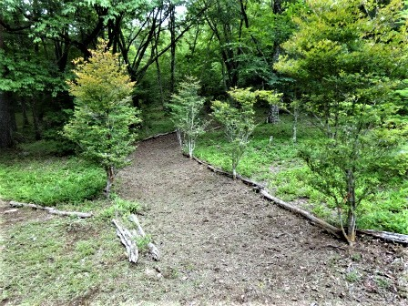 企業の森活動日記 サーラエナジー㈱ サーラの森_d0105723_08203355.jpg