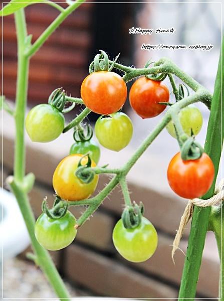 家庭菜園☆枝豆とミニトマトとおまけ♪_f0348032_17525837.jpg