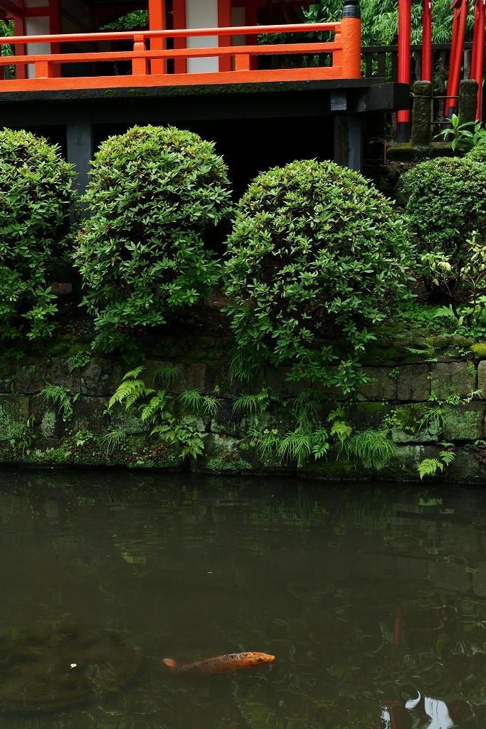 根津神社 byLUMIX 20-60mm_f0050534_15320657.jpg