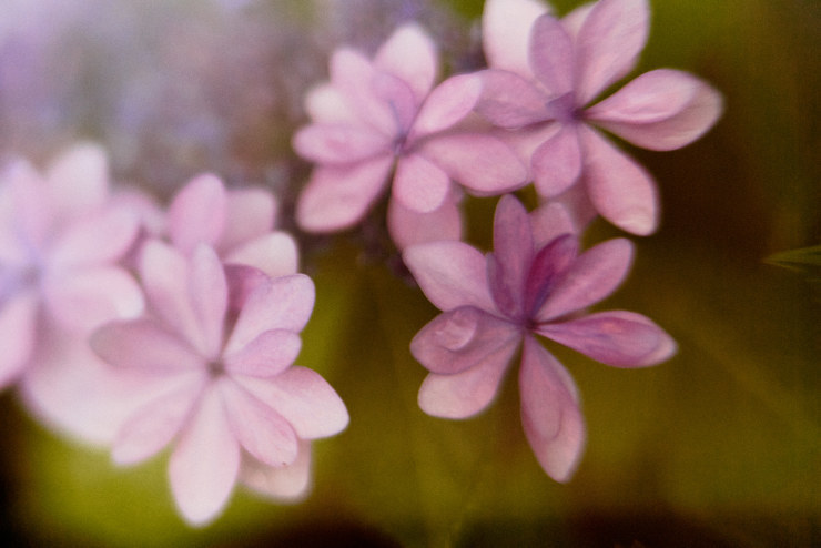 flowers(3cut)_e0342136_18283662.jpg