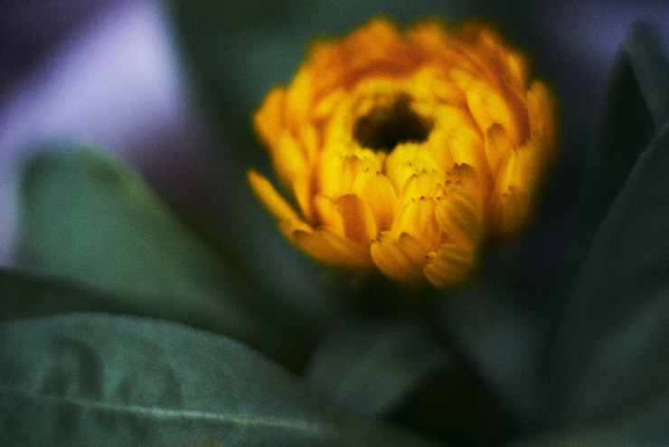 flowers(3cut)_e0342136_18351715.jpg