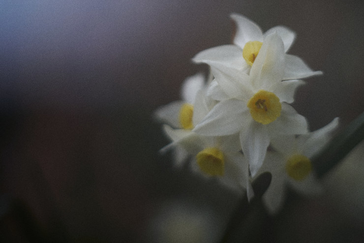 flowers(3cut)_e0342136_18375616.jpg