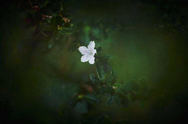 flowers(3cut)_e0342136_18393486.jpg