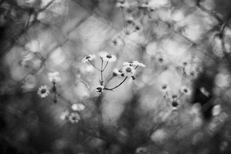 flower(3cut)_e0342136_18424853.jpg