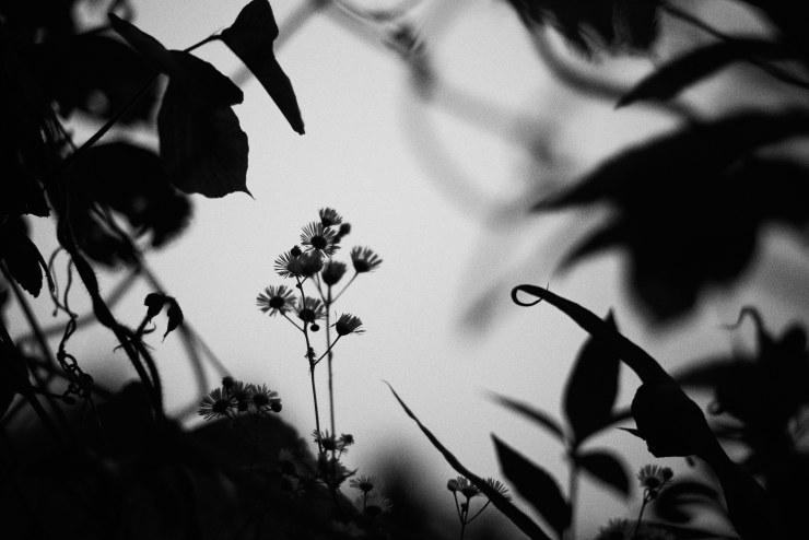 flower(3cut)_e0342136_18425112.jpg