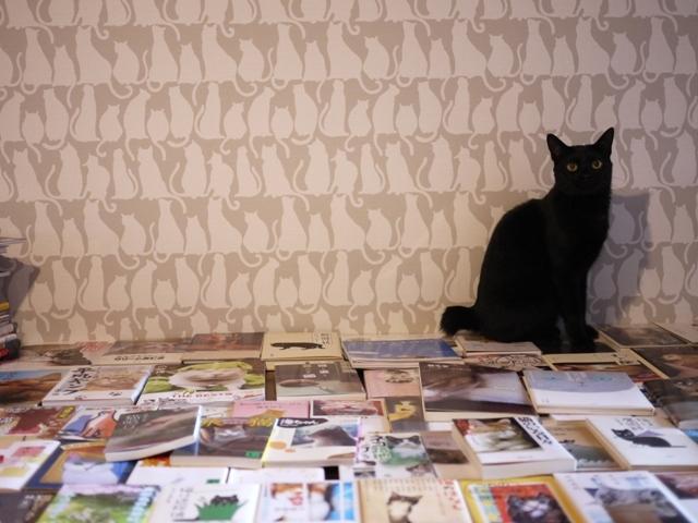 たくさんの猫本猫 めりぃぽぴんず編。_a0143140_16215391.jpg