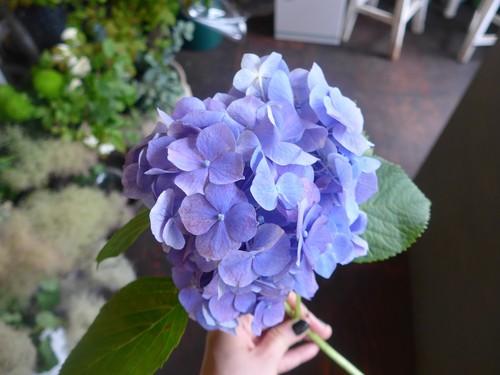 花修行~「鮨 波やし」さんの2020年6月のお花~_f0232060_1857056.jpg