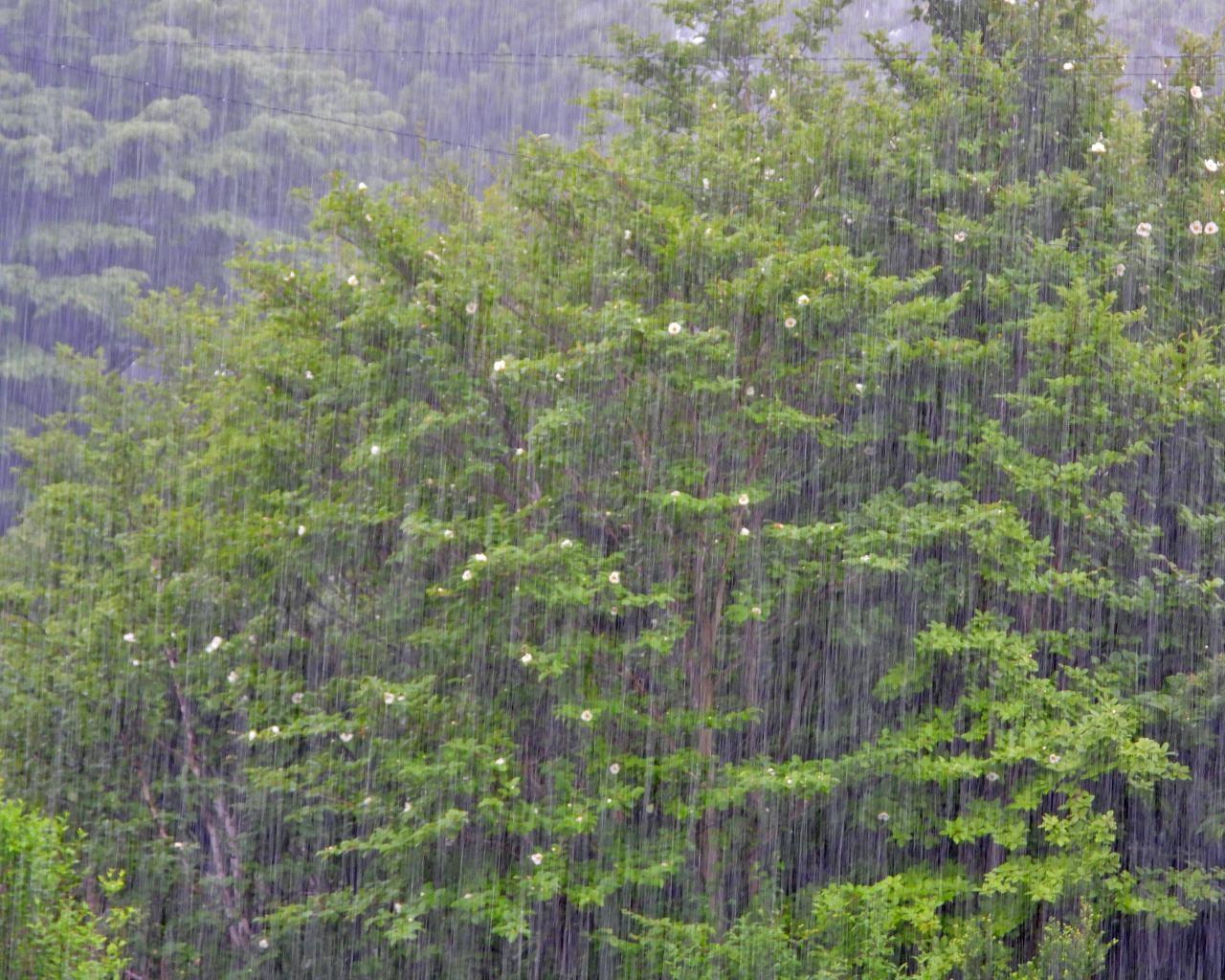 箕輪城跡で 通り雨と雨上がり_c0305565_17273376.jpg