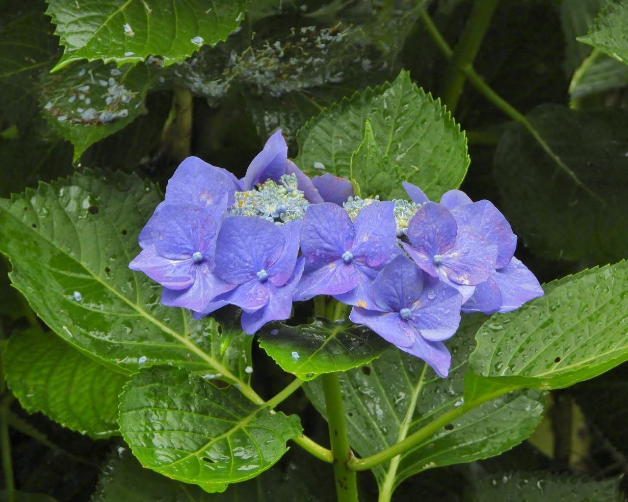 箕輪城跡で 通り雨と雨上がり_c0305565_17281440.jpg