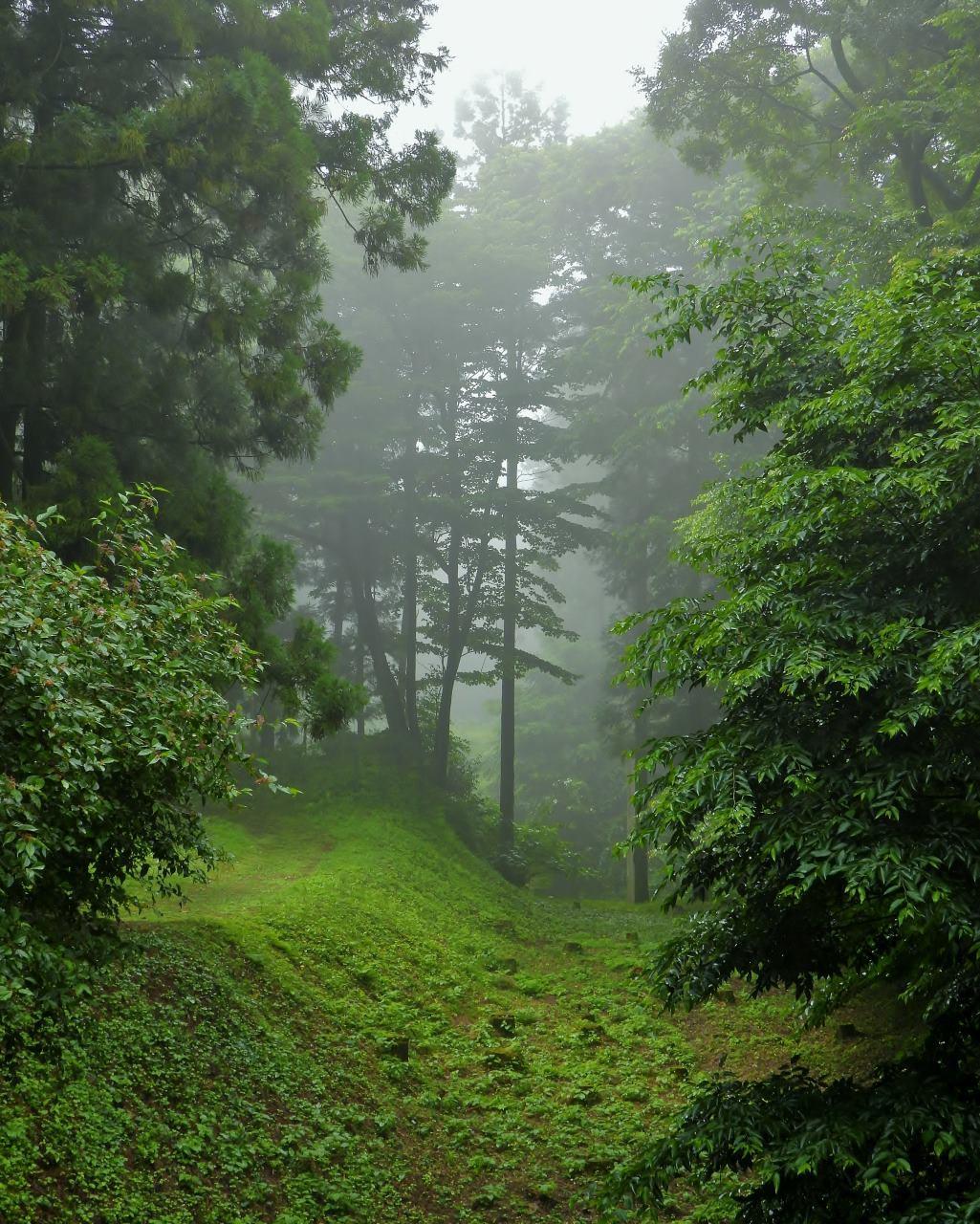 箕輪城跡で 通り雨と雨上がり_c0305565_17284084.jpg