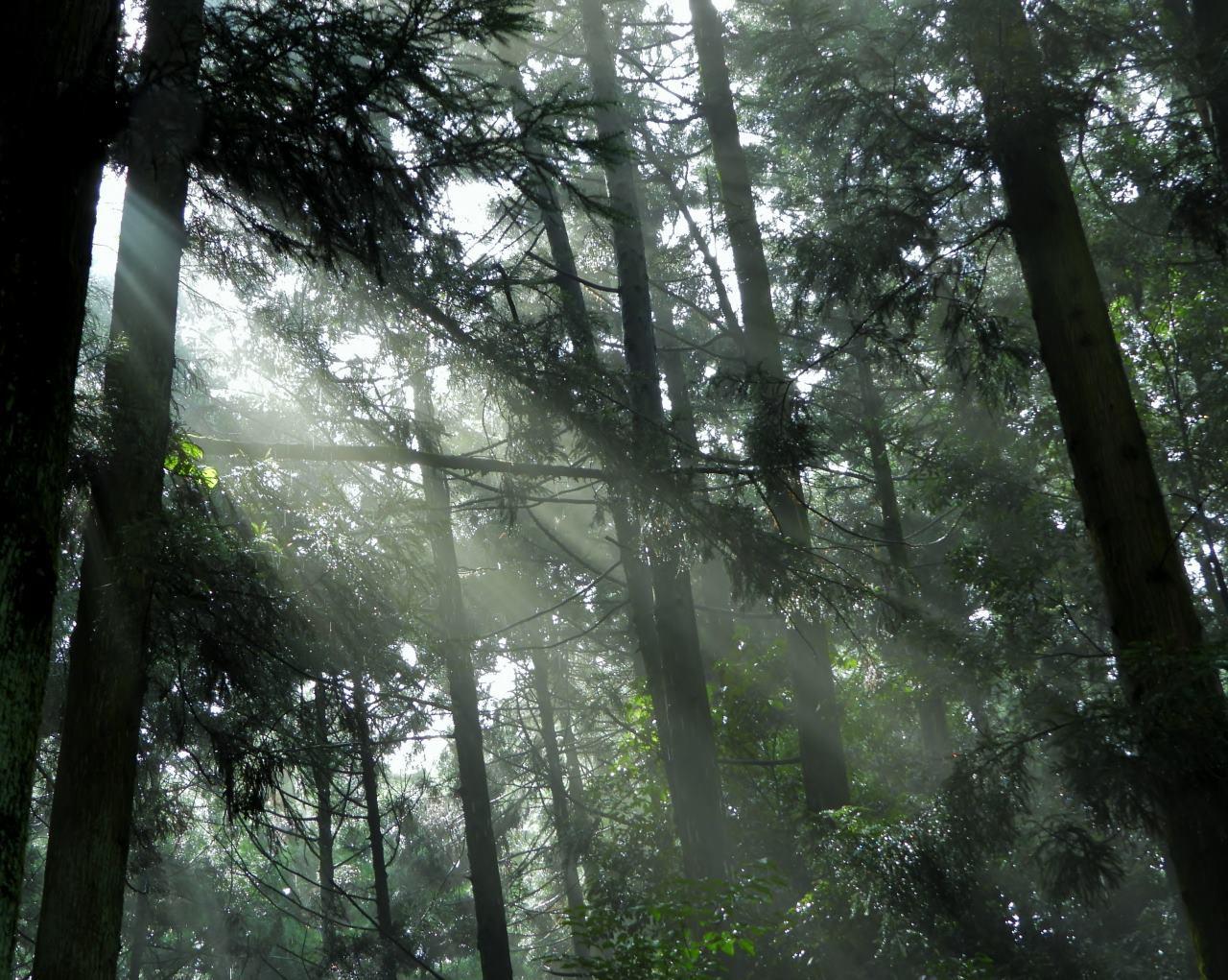 箕輪城跡で 通り雨と雨上がり_c0305565_17285599.jpg