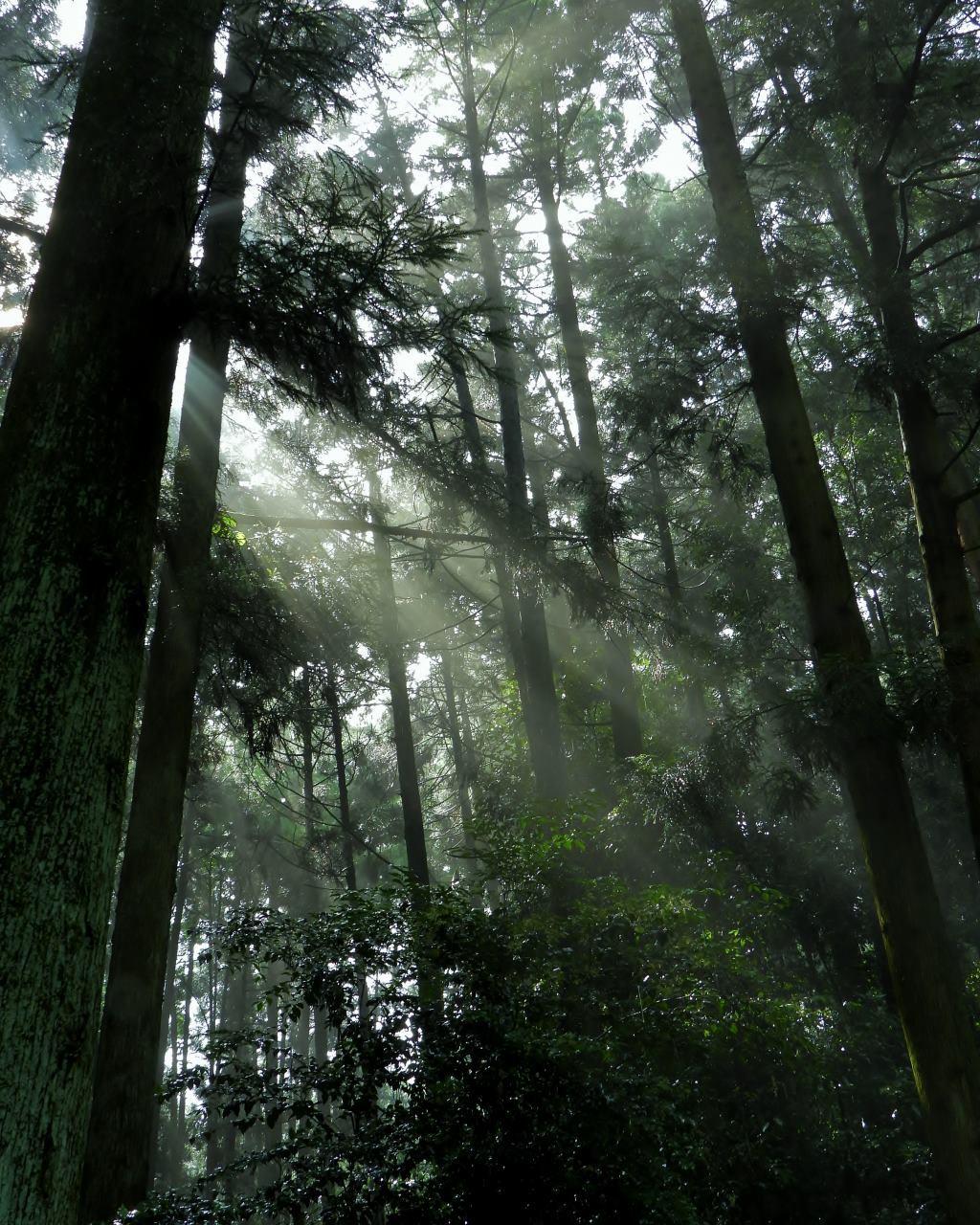 箕輪城跡で 通り雨と雨上がり_c0305565_17291444.jpg