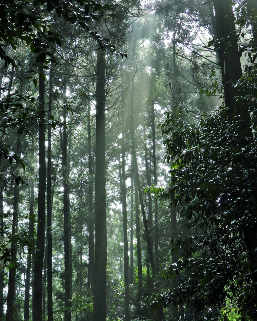 箕輪城跡で 通り雨と雨上がり_c0305565_17293047.jpg