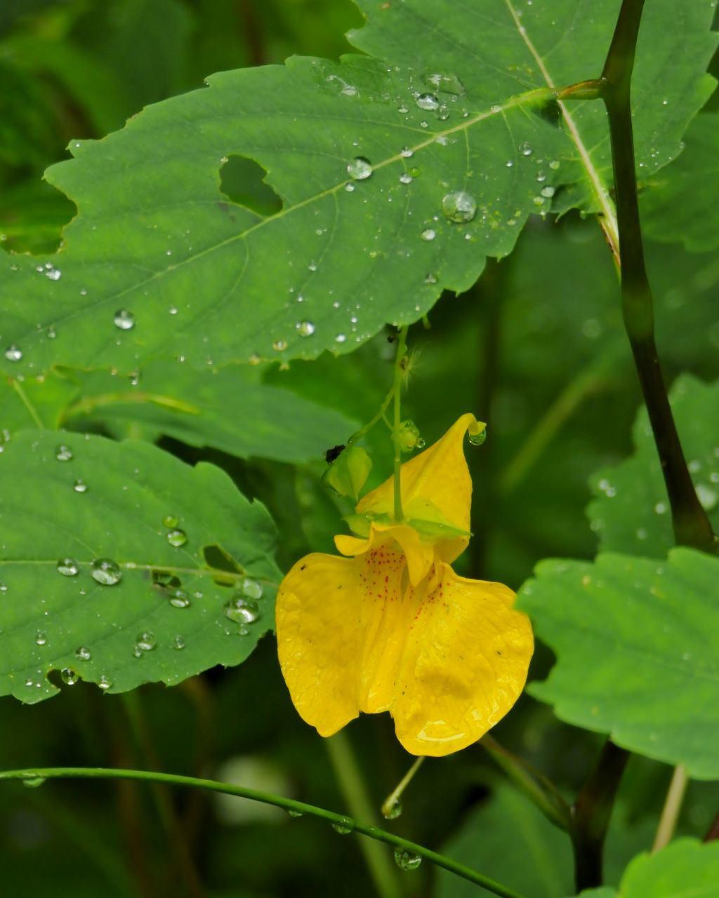 箕輪城跡で 通り雨と雨上がり_c0305565_17295703.jpg