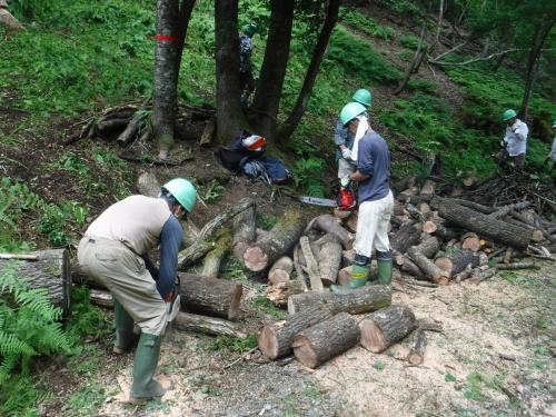 6/27 未来の森づくり 開催しました!_f0212679_15502739.jpg