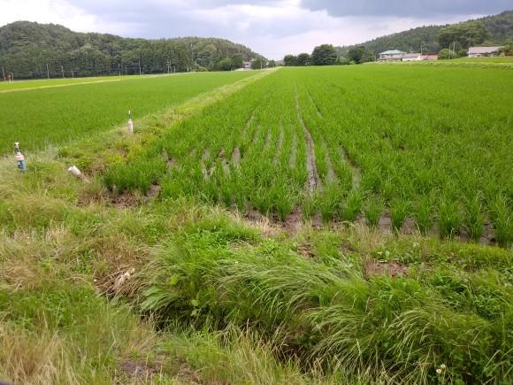 農作業_e0161791_21190033.jpg
