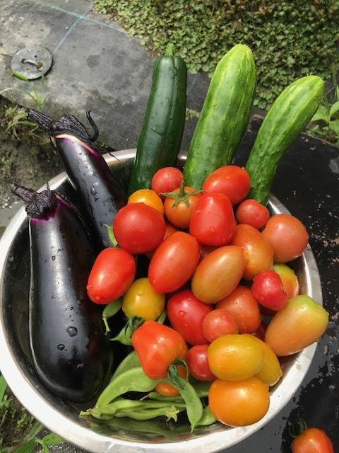 トマトが病気?_f0204295_19330304.jpg