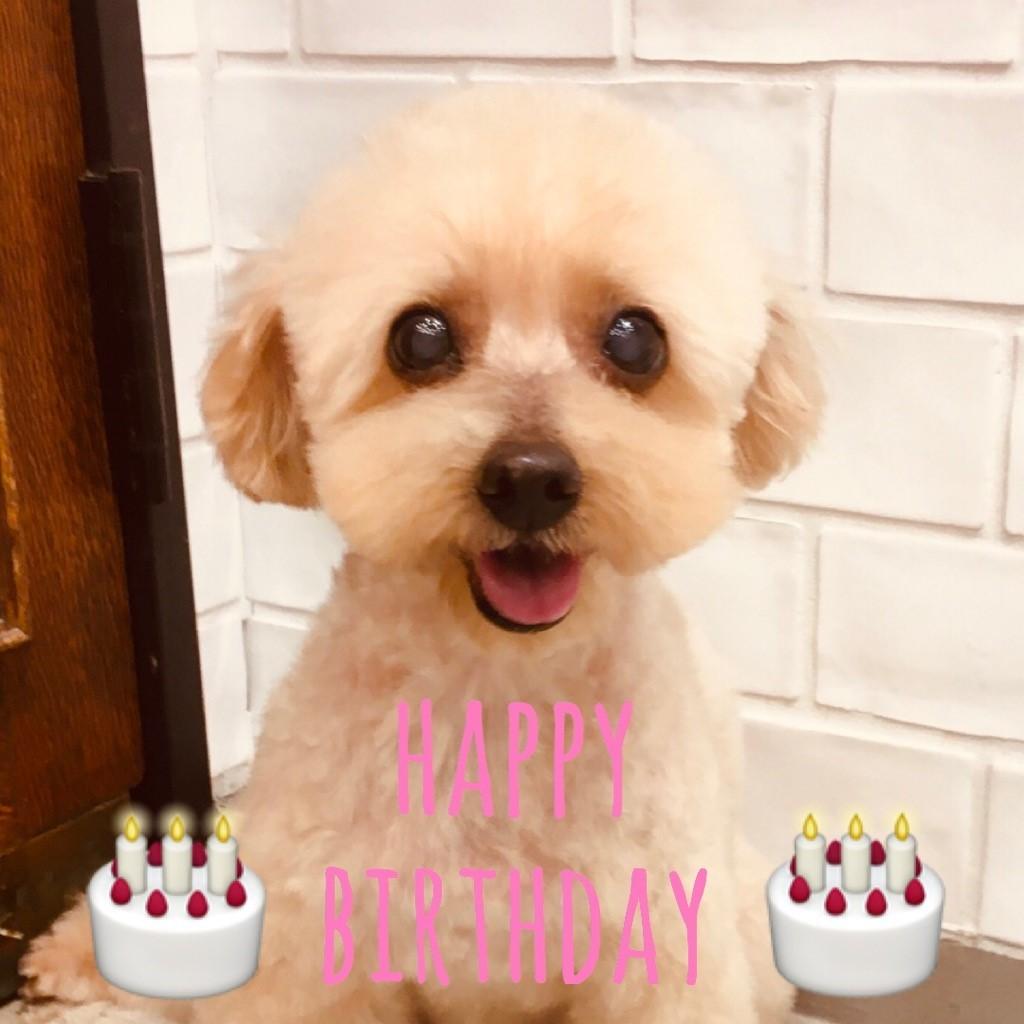 ☆ Happy Birthday ・ ハッピーちゃん ☆_d0060413_14242991.jpg