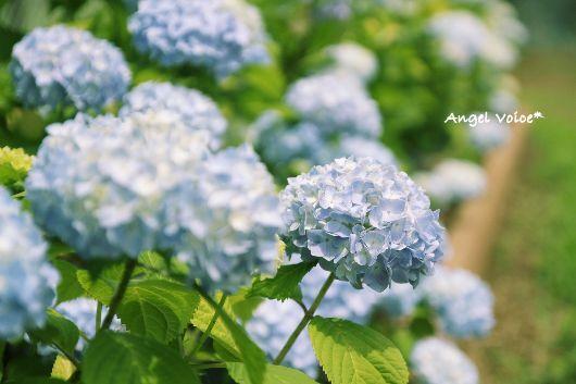 6月の匂い_d0147742_19494458.jpg
