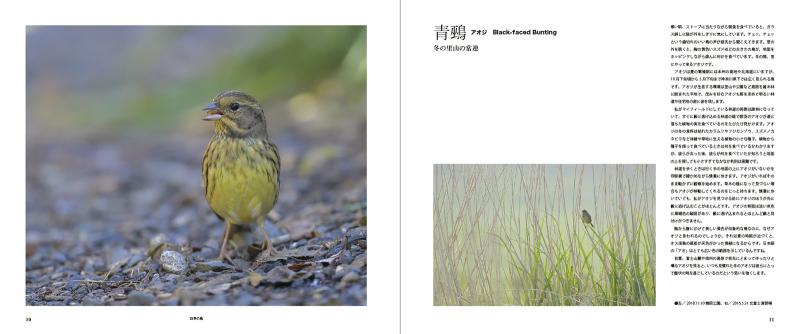 blurbのphoto bookを試す_c0042548_17390691.jpg
