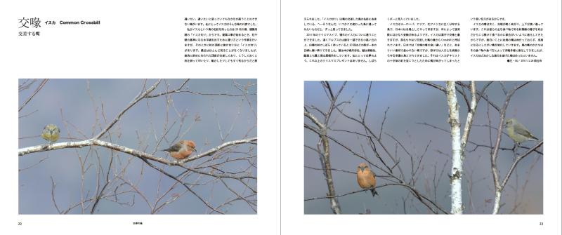 blurbのphoto bookを試す_c0042548_17391256.jpg