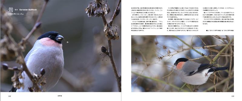 blurbのphoto bookを試す_c0042548_17391794.jpg