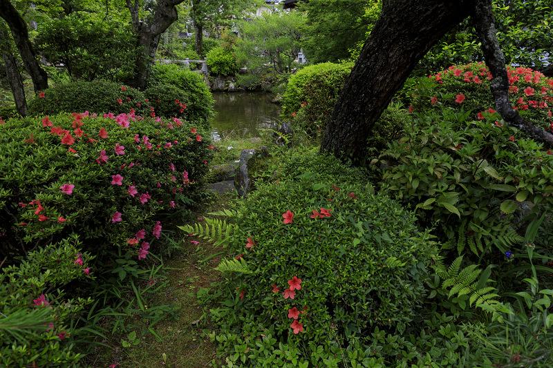 初夏の神光院_f0155048_025255.jpg