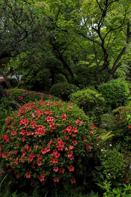 初夏の神光院_f0155048_03091.jpg