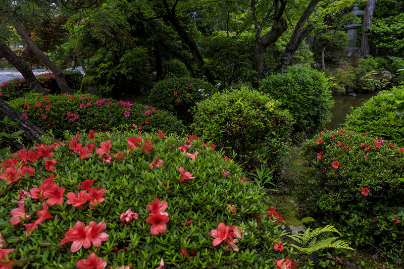 初夏の神光院_f0155048_041188.jpg