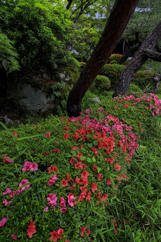 初夏の神光院_f0155048_053656.jpg