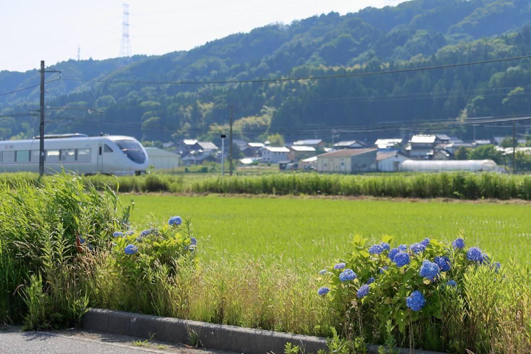 電車に花_e0403850_21230984.jpg