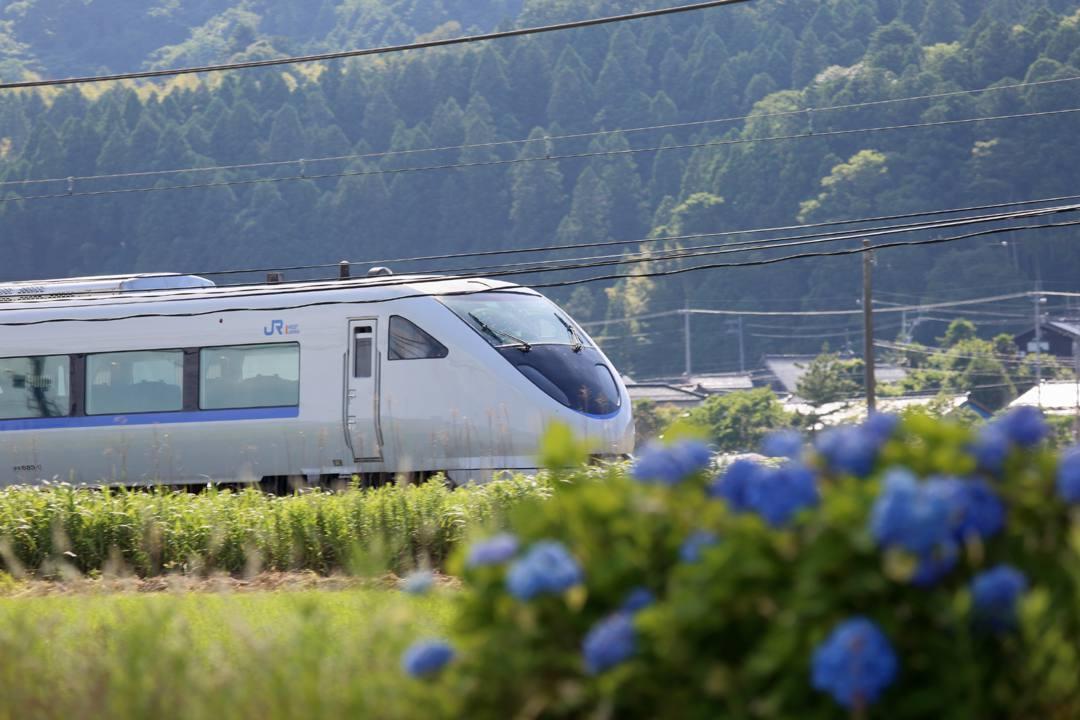 電車に花_e0403850_21231308.jpg