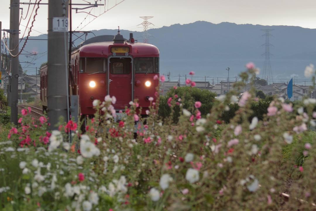 電車に花_e0403850_21232461.jpg