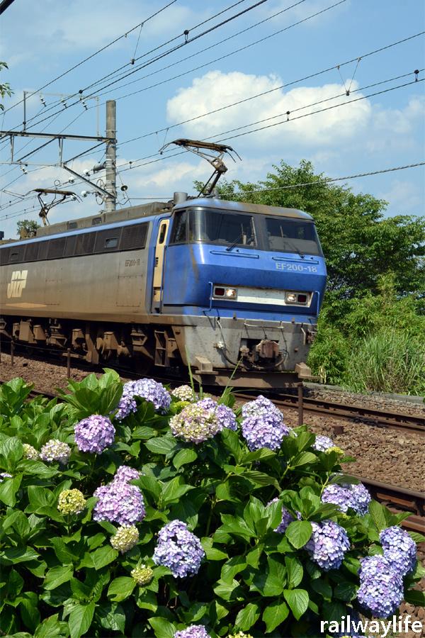 紫陽花貨物列車_f0113552_23123033.jpg