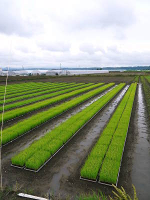 七城米 長尾農園 令和2年度の田植えの様子を現地取材!今年も美しすぎる田んぼなんです!_a0254656_17453850.jpg