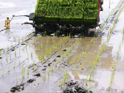 七城米 長尾農園 令和2年度の田植えの様子を現地取材!今年も美しすぎる田んぼなんです!_a0254656_18010193.jpg