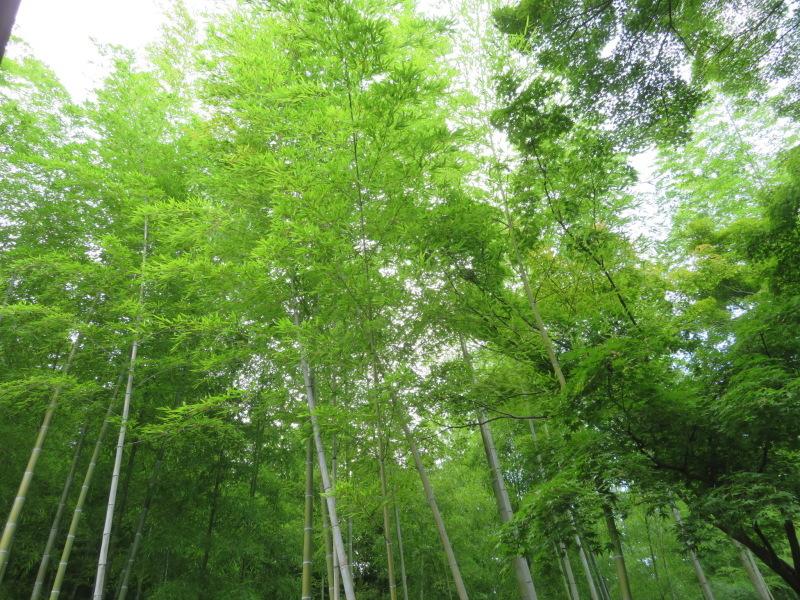 再び嵐山へ行きました、今回の目的は天龍寺_f0129557_20201498.jpeg