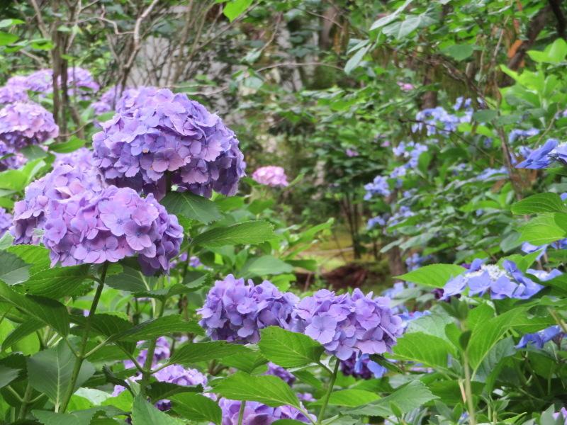 再び嵐山へ行きました、今回の目的は天龍寺_f0129557_20225869.jpeg